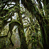 Hoh Rainforest, Washington