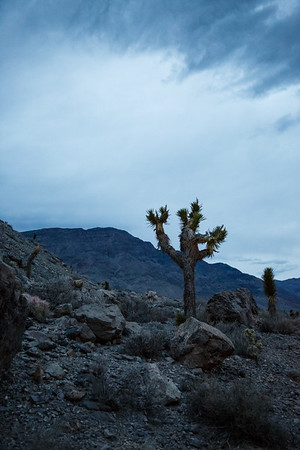 Death Valley National Park, March 2019