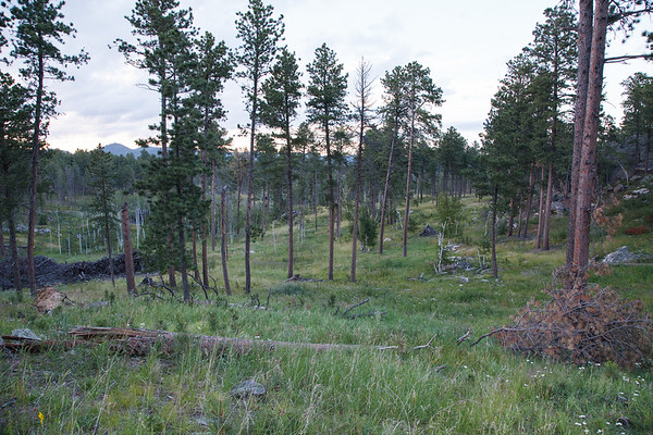 Blackhills National Forest, SD