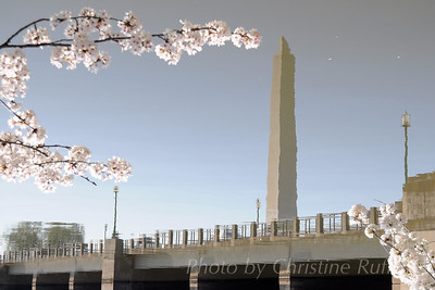 Washington Monument reflected below cherry blossoms