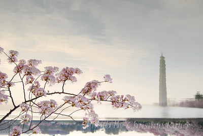 Washington Monument reflected in the Tidal Basin beneath a branch of cherry blossoms. Photo by Christine Ruffo All rights reserved