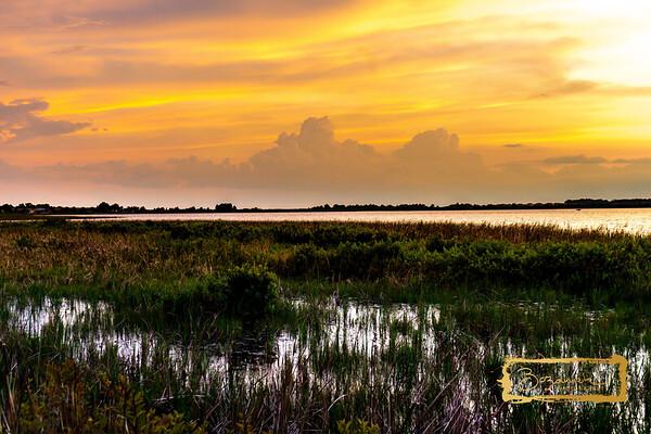 Scenes of Florida