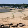 Cape Cod - Wellfleet