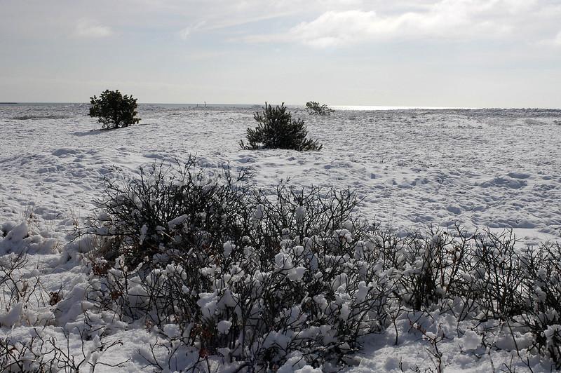 Cape Cod - West Dennis