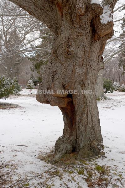 Screaming Tree - Stock