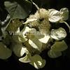 Flowers on Rose Kennedy Greenway, Boston, MA.<br /> (c) Anna M. Croke/Visual Image, Inc.