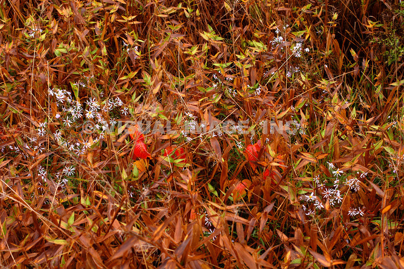 Wildflowers - Stock