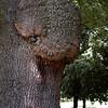 Tree - Stock