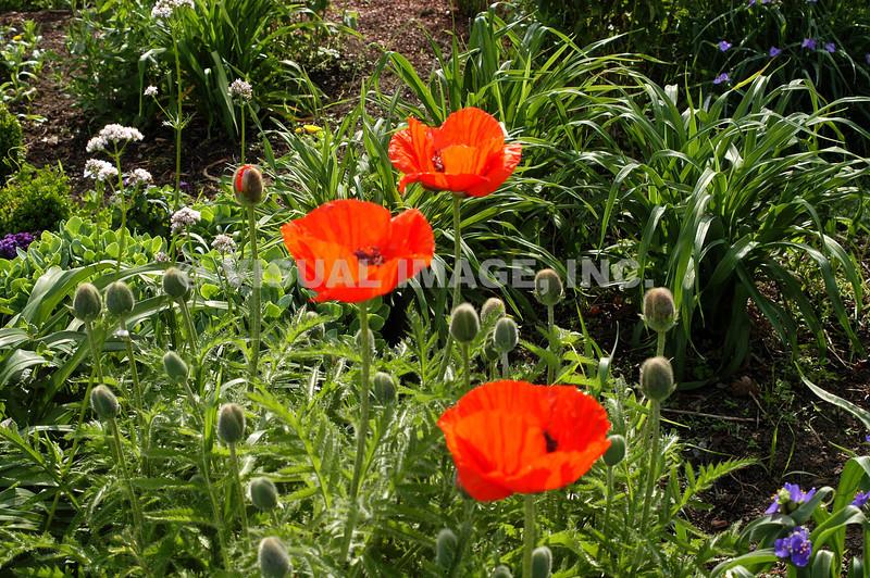 Garden - Stock