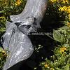 Statue/Garden - Maine
