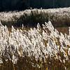 Reeds - Stock