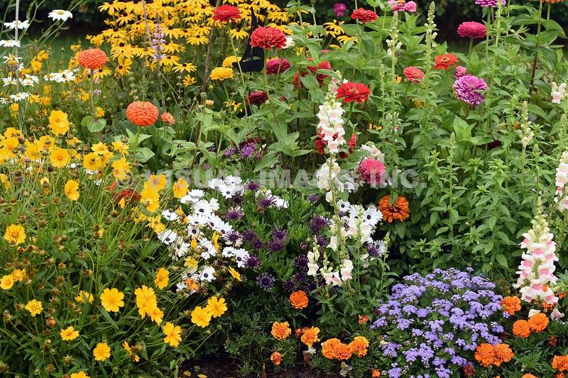 Assorted Wild Flowers - Stock