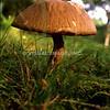 Wild Mushroom - Stock