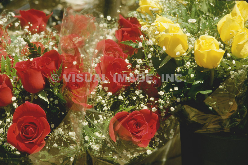 Roses - Stock