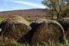 Hay Rolls in Autumn, PA. <br /> (c)Anna M. Croke/Visual Image, Inc.
