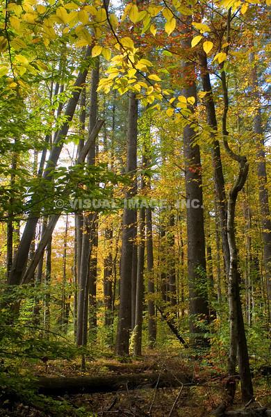 New Hampshire - Lincoln