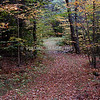 Path through Woods, Campton, NH.<br /> (c) Anna M. Croke/Visual Image, Inc.