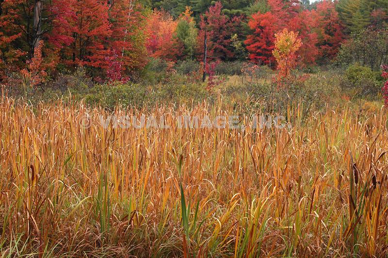 New Hampshire - Canterbury