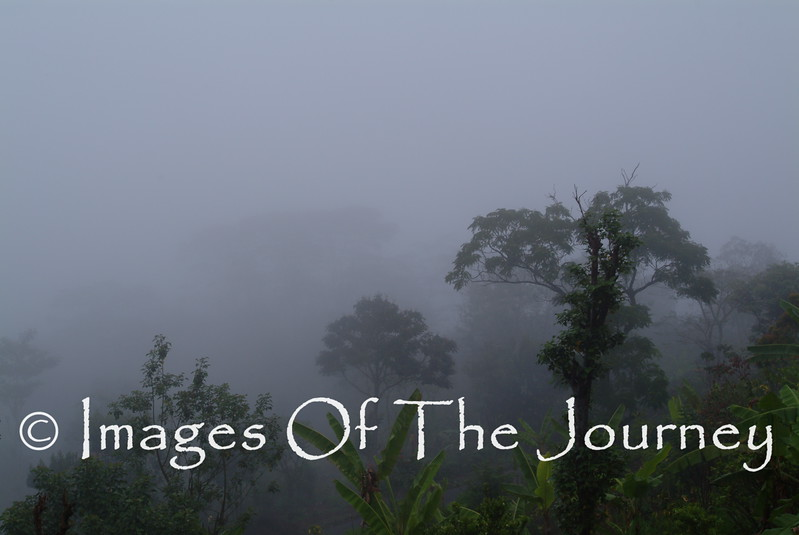 Jungle in the mist