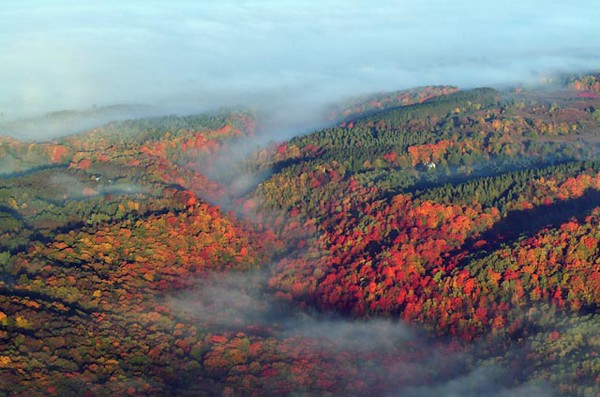 Fall Colours and fog Caledon and North of Toronto