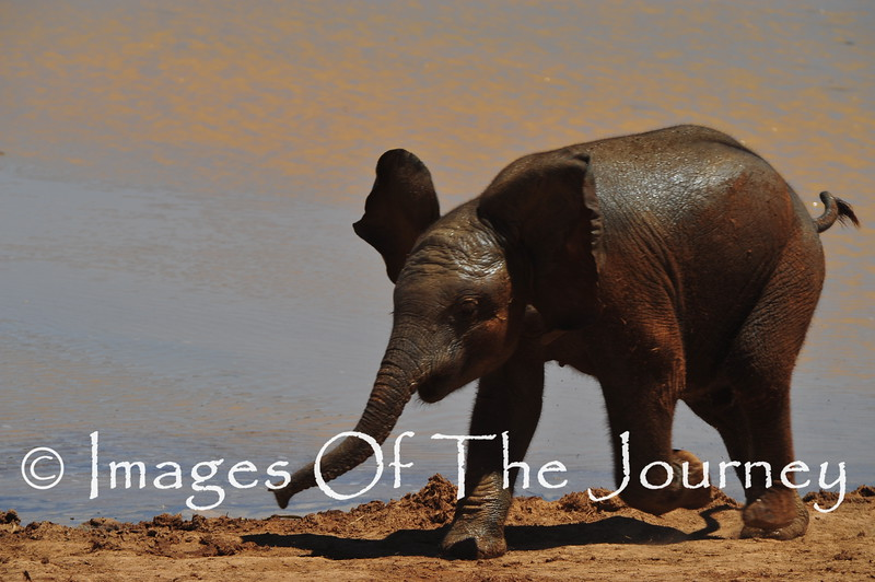 Dumbo just before takeoff<br /> <br /> South Africa<br /> Addo Elephant National Park