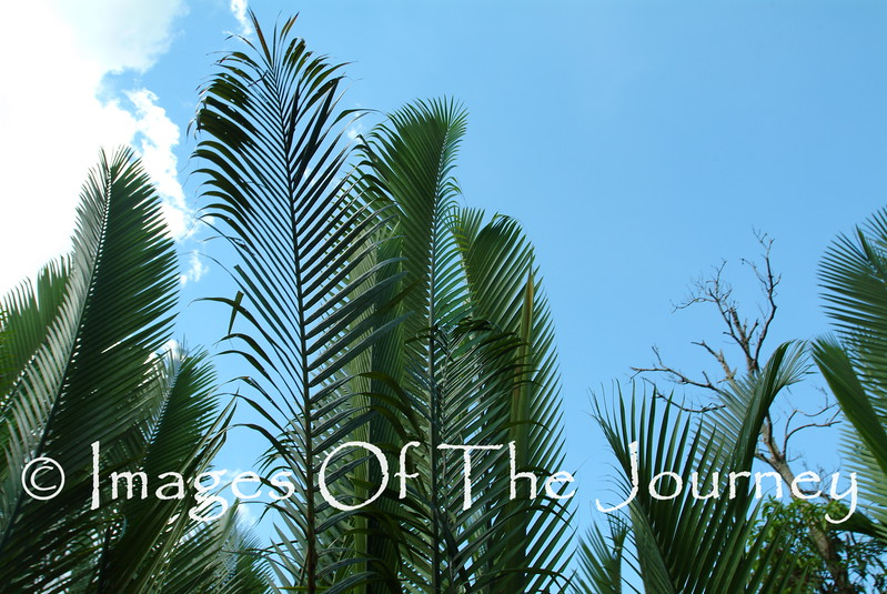 Palms in the Mekong Delta
