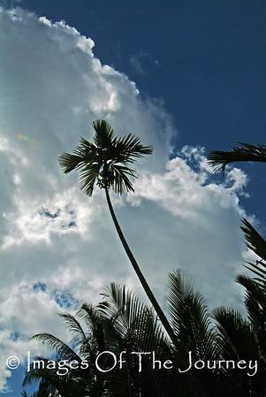 Lone Palm Mekong