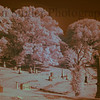 Vine Street Hill Cemetery, Infrared image