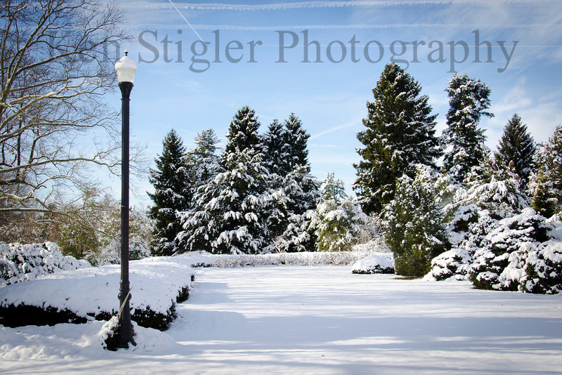 Snowy evergreens and light post