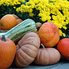 Pumpkins and gourds for sale at Findlay Market