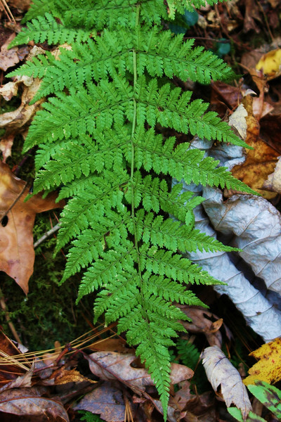 Autumn at Red River Gorge.  This is from the forest floor where a different view of autumn existed