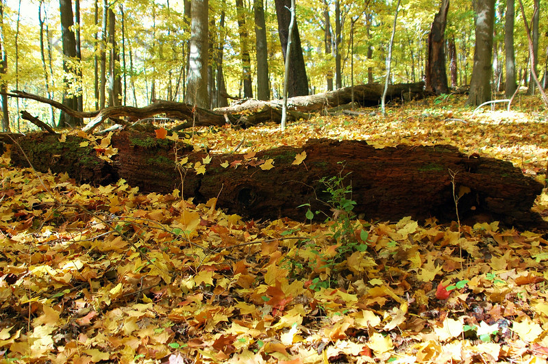 Mount Airy Forest, Cincinnati, Ohio