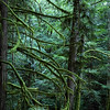 Tropical Rainforest in East Sooke, BC. This image reminded me of a fairy tale forest.