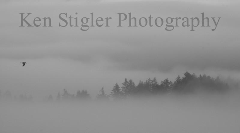 Solitude at Ed McGregor Park in Sooke, BC.