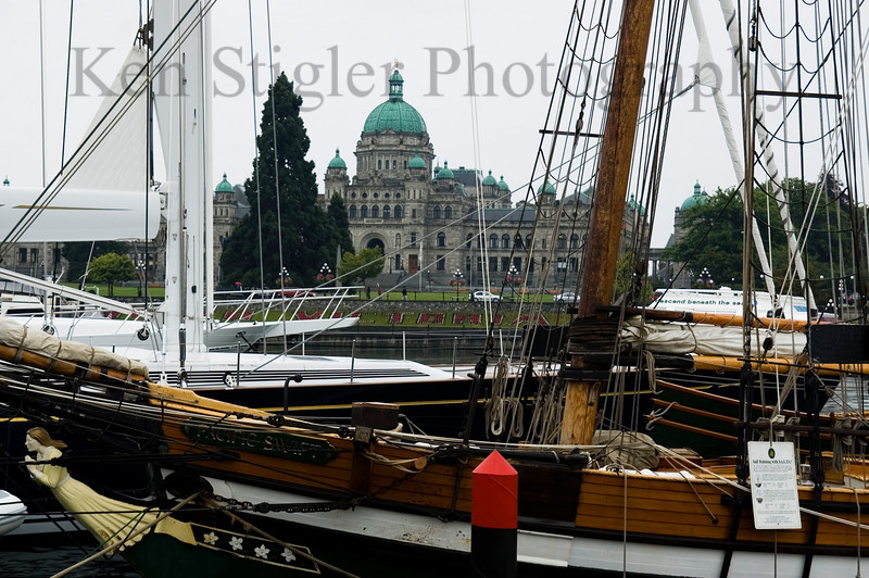 Parliament and the Pacific Swift