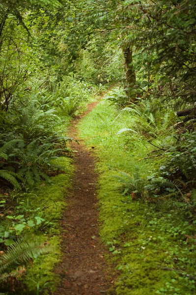 British Columbia is known for it's subtropical rainforests.  There are ferns and moss all around you in the woods