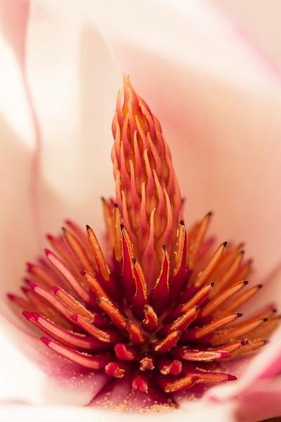 Flower in Santa Cruz
