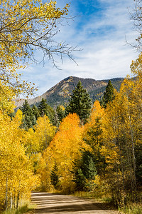 Fall colors, CO