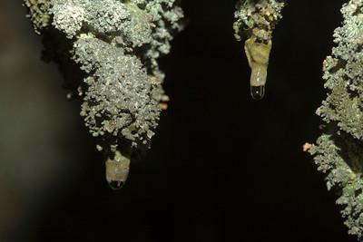 Speleogenesis on Algal Stalactites