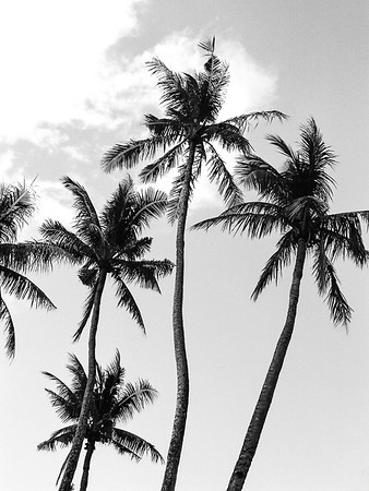 Monochrome palms