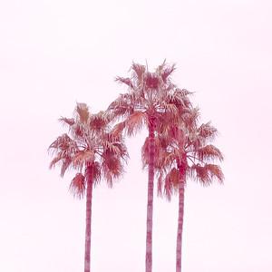 Palm Sky Pink III