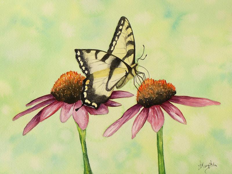Butterfly Cone Flower