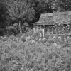 "<div class=""boxTop""><h3 id=""galleryTitle"" class=""title notopmargin"">Szabo Country House, Jiu Valley, Romania, 2003</h3> B&W 35mm"