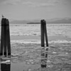 "<div class=""boxTop""><h3 id=""galleryTitle"" class=""title notopmargin"">Summer Comes to Champlain, Lake Champlain, Vermont, 2004</h3> B&W 35mm"