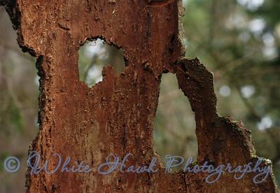 Tree bark, in Redmond Watershed Park