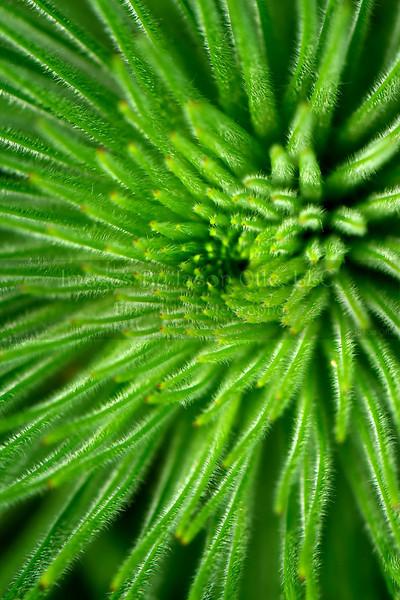 Houston Arboretum 2010-05-30 - 13-04-08