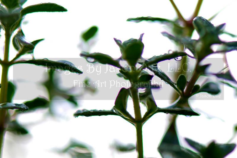 Dew Drops 2010-04-17 - 06-53-33