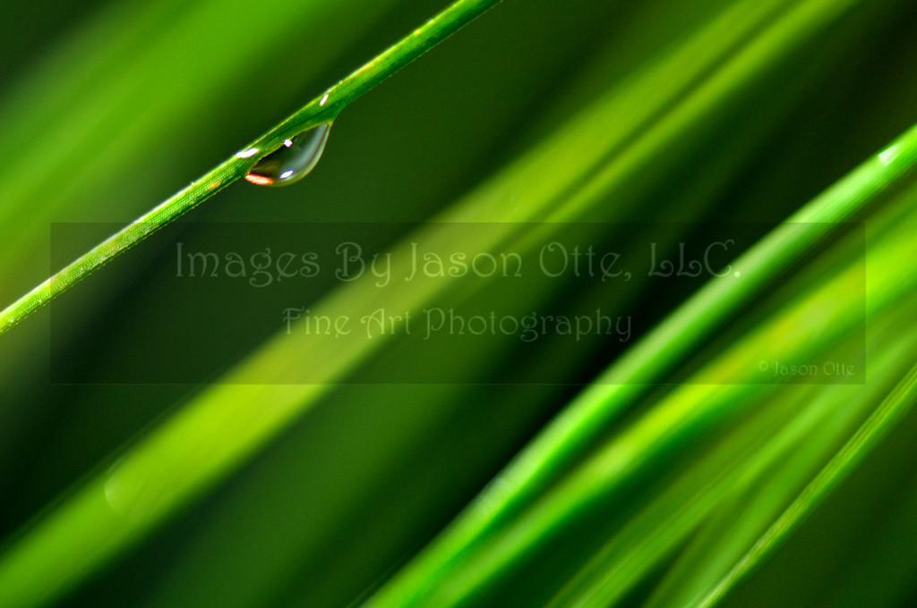 Dew Drops 2010-04-11 - 12-12-00
