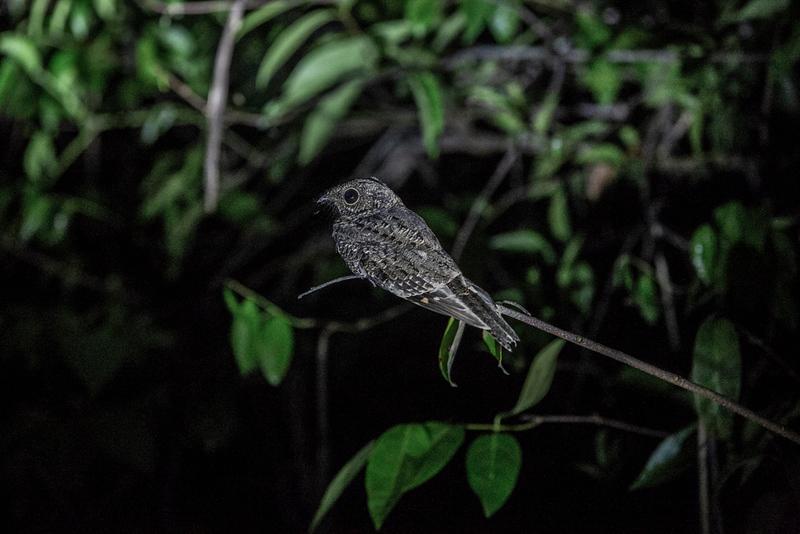 Bird at night / Pássaro à noite