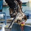 Big Birds Don't Share
